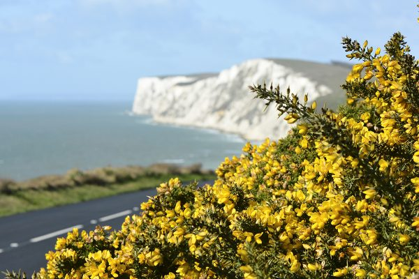 Freshwater Bay, Tennyson Down and Military Road